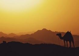 Photo d'un chameau dans le désert du Sahara à proximité de Marrakech