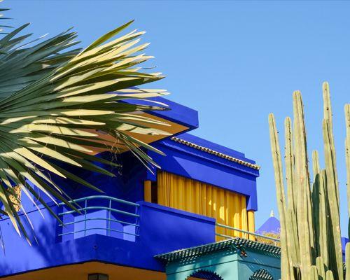 Le Jardin Majorelle à Marrakech avec des cactus et des palmiers